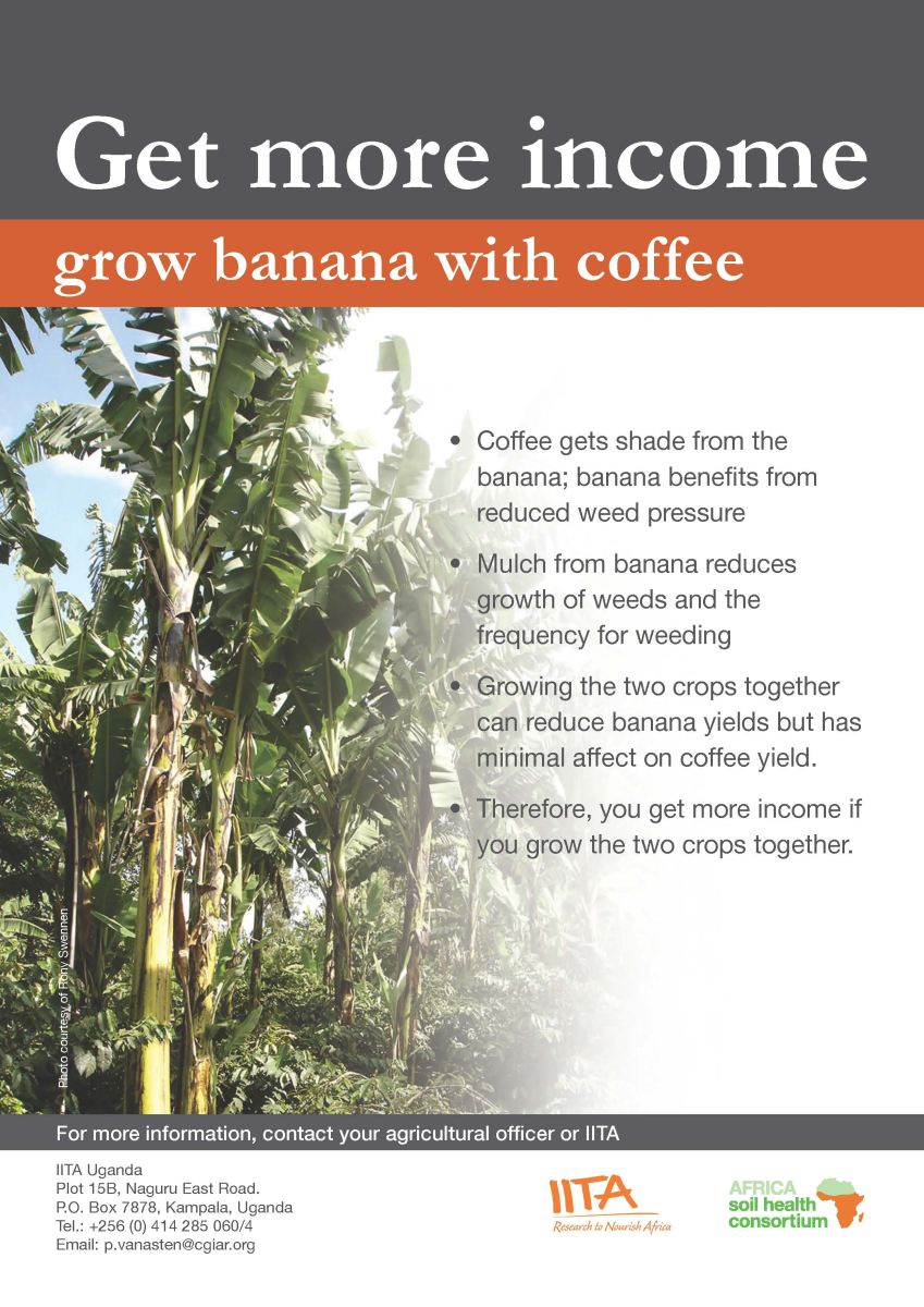 Banana_coffee_poster