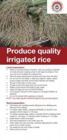 lowland irrigated rice