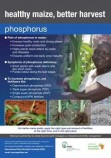 Phosphorous for maize