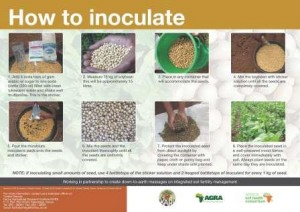 how to inoculate