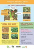 P deficiency poster for smallholders