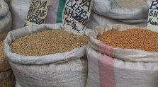 sorghum-seed selection