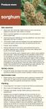 Sorghum factsheet