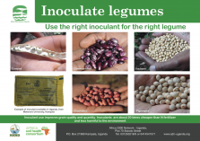 Inoculate legume poster
