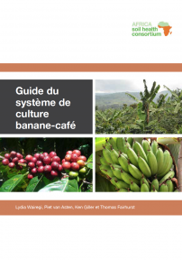 Coffee banana colour French