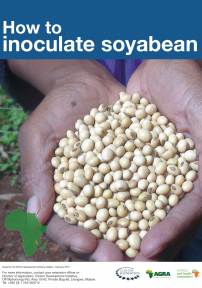 184 How to inoculate soybean