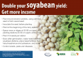 185 soybean poster