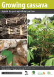 331 cassava flipchart