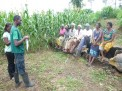 Farmers in Hohoe listening