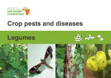 Legumes crop pests and diseases