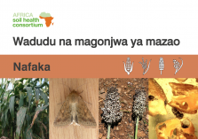 Pests and diseases- cereals