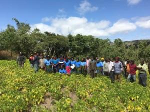 SILT 2016 AFAP - Ifwagi farmer field day