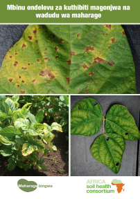 534 common bean pests and diseases