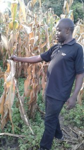 Uptake maize farmer