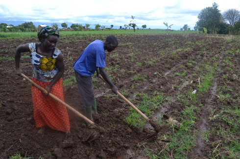 Farmers in land prep