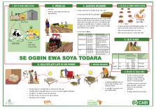 Grow soybean poster - Yoruba