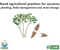 Cassava agronomy flip chart