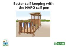Calf pen