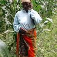 UPTAKE woman maize faremr with phone