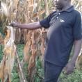 Uptake maize farmer